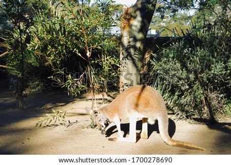 The picture of the kangaroo