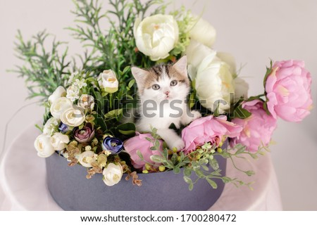funny cat in a basket with a flower arrangement