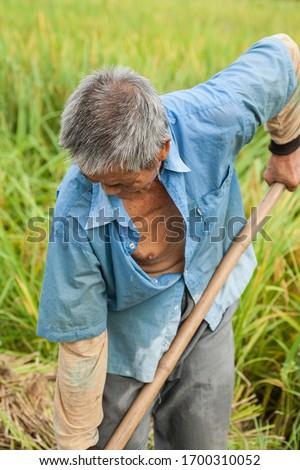 Old men farming in the fields #1700310052