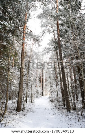 Beautiful forest road view with white snow and cloudy sky. Photo taken in Europe, Latvia, Kuldiga. #1700349313
