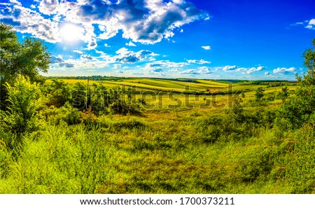 Summer rural field horizon landscape. Rural summer meadow field view. Summer meadow landscape #1700373211