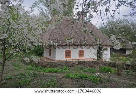Old Ukrainian house and blooming sakura near it #1700446096