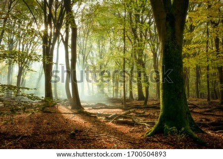 Autumn forest scene with low sunlight, shadows,  and green leaves Royalty-Free Stock Photo #1700504893