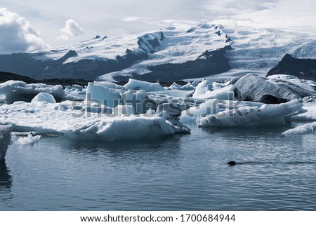 Iceland, Jokulsarlon lagoon, Beautiful cold landscape picture of icelandic glacier lagoon bay, a seal swims in the water