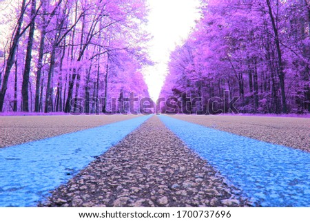 A weird picture of a symmetrical road and purple trees
