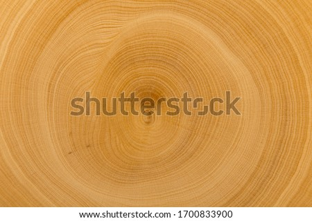 End cut boxwood with annual rings of golden color. Close-up view