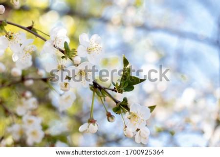 White spring flowers on trees in a park #1700925364