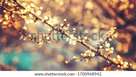 Blooming tree in the garden. Selective focus nature. #1700968942