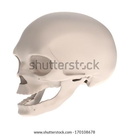 realistic 3d render of fetus skull #170108678
