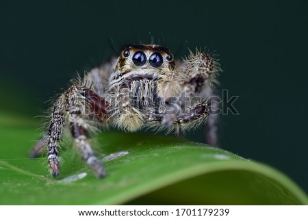 Unfocused picture gray ash texture background, one type of jumping spider, merged with beautiful free space