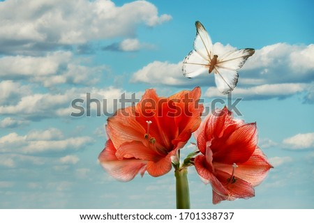 The enormous flower of red amaryllis and a striking decorative butterfly on a background of blue sky with clouds. Fantastic picture, Aryan magical place.