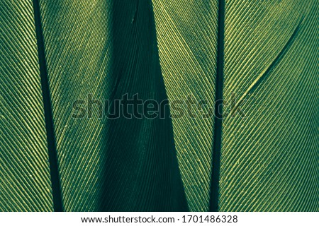 Close up Beautiful green Bird feather background pattern texture for design .  Macro photography view.