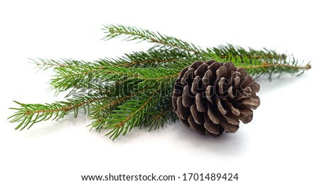 Cones and christmas tree isolated on a white background. Royalty-Free Stock Photo #1701489424