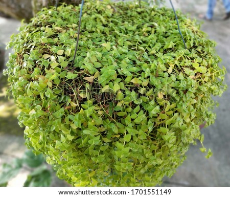 Mosses are a type of bryophyte, which is a group of non-vascular plants #1701551149