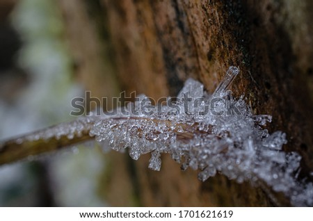 Ice Crystals frozen on tree branch dew crystal frost picture of icy structure very detailed freezing macro closeup