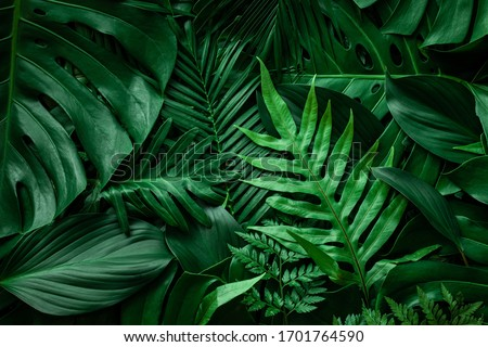 closeup nature view of green leaf and palms background. Flat lay, dark nature concept, tropical leaf Royalty-Free Stock Photo #1701764590