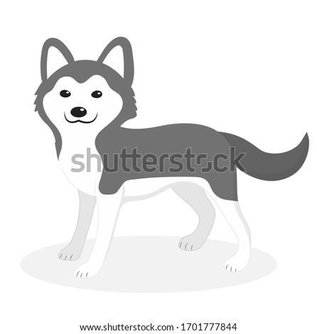 Husky breed dog icon, flat, cartoon style. Cute puppy isolated on white background. illustration, clip-art.