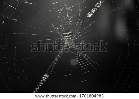 a spider in his net . macro picture of a spider .