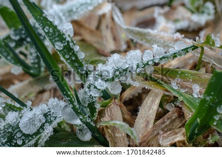 Ice Crystals Deep frozen on grass branch dew water crystal drop frost picture of icy structure very detailed freezing macro closeup