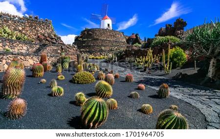 Lanzarote island - Botanical cactus garden, popular attraction in Canary islands #1701964705