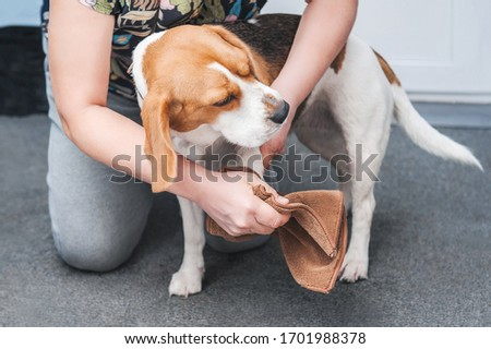 the owner of the dog washes her dirty paws after walking in a special device for washing paws and rags Royalty-Free Stock Photo #1701988378