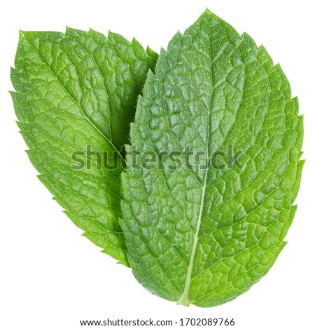 Green mint pepper leaf isolated on white. Fresh mint leaf. Pepper mint clipping path. Full depth of field #1702089766