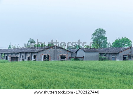 Green wheat fields and houses #1702127440