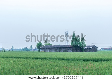 Green wheat fields and houses #1702127446