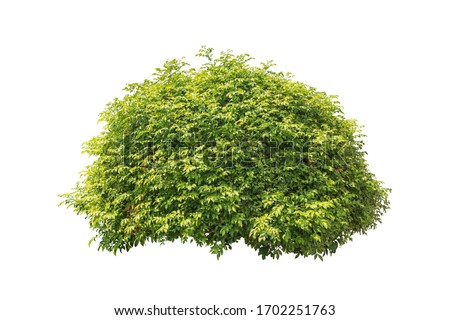 plant bush tree isolated include clipping path on white background Royalty-Free Stock Photo #1702251763