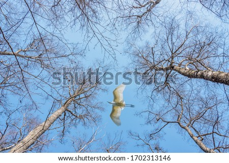 Looking up to the Sky through the Tall Trees with Egret