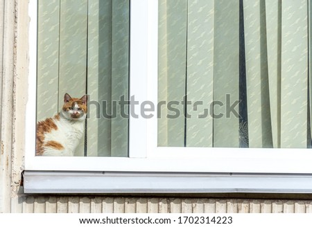 Cat Watching The World Go By During Coronavirus Stay At Home