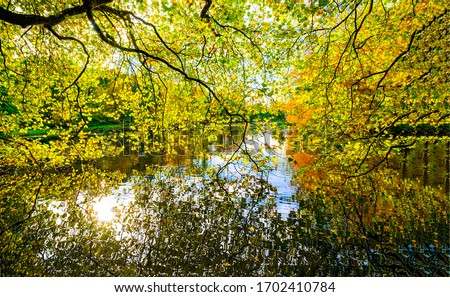 Autumn forest pond water through tree branches. Autumn forest pond. Autumn pond in autumn forest