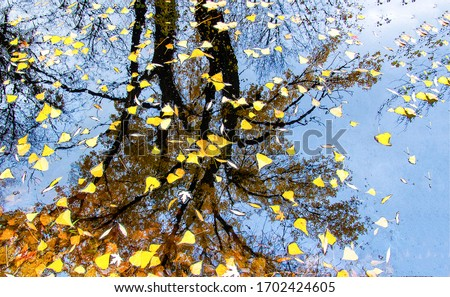 Autumn leaves in puddle of water. Autumn puddle leafs. Autumn puddle leaves. Autumn leaves in puddle Royalty-Free Stock Photo #1702424605