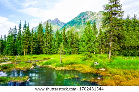 Mountain forest water landscape view. Forest pond in mountains
