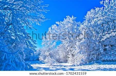 Winter snow covered trees in forest. Winter snow forest scene. Snowy winter forest trees. WInter snow scene #1702431559