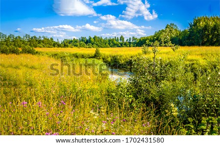 Rural meadow creek in sunny day. Summer meadow creek landscape. Meadow creek view #1702431580