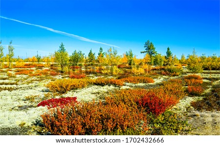 Autumn wilderness steppe nature landscape. Autumn plain steppe view. Steppe nature in autumn #1702432666