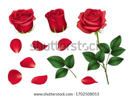 Realistic Detailed 3d Elements Set of Red Roses Include of Flower, Leaf and Bud. Vector illustration