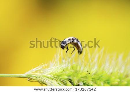 ladybug larvae on green plant in the wild, north china  #170287142