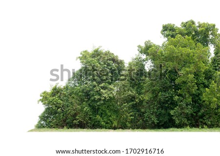 Group of tree isolated on white #1702916716