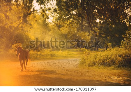 Horse in sunlight at sunset
