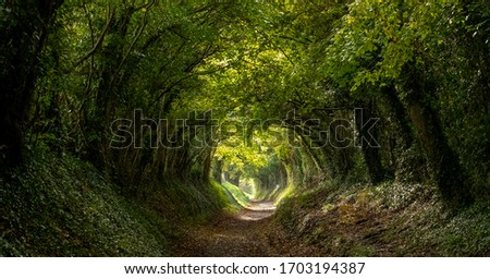 Light at the end of the tunnel. Halnaker tree tunnel in West Sussex UK with sunlight shining in through the branches. Symbolises hope during the Coronavirus Covid-19 pandemic crisis. Royalty-Free Stock Photo #1703194387