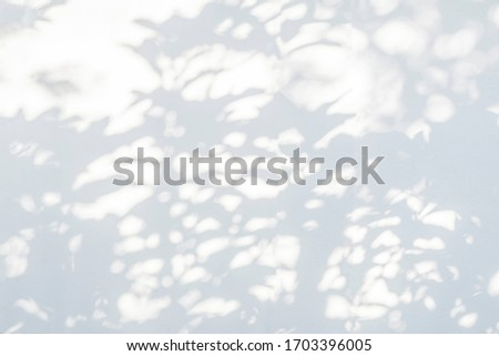 Leaves shadow and tree branch background.  Natural leaves tree branch shadows and sunlight dappled on white concrete wall texture for background wallpaper and any design #1703396005