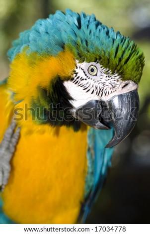 Parrot head closeup #17034778