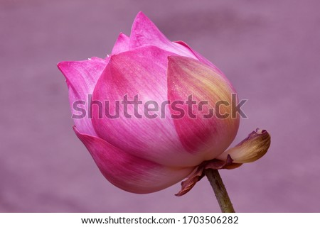 Abstract lotus flower image worshiping Buddha with blurred background