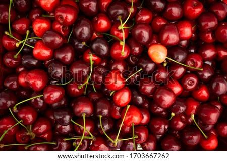 Red Cherries. pile of ripe cherries with stalks. #1703667262