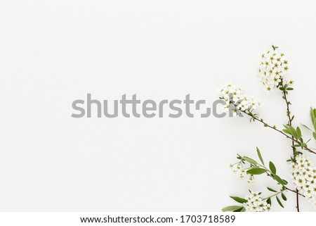Minimal style photography. White flowers on white background, natural creative composition top view background with copy space for your text. Flat lay.