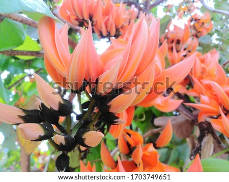 picture of beautiful​ flower, sacred Tree, Perennials. #1703749651