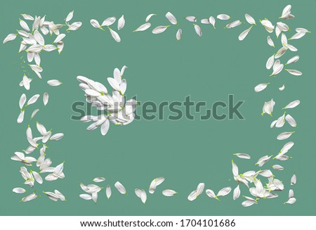 Frame made of blue or green paper with a border of chamomile petals. Decorative dove consists of white chrysanthemum petals.