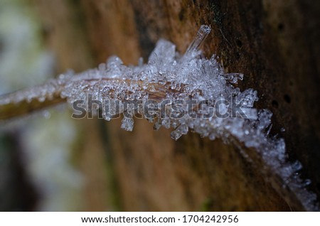 Ice Crystal, shiny dew crystals frozen on bent tree branch, frost picture of icy structure very detailed freezing macro closeup